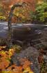 Oxtongue Rapids i...