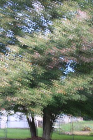 Painterly Trees