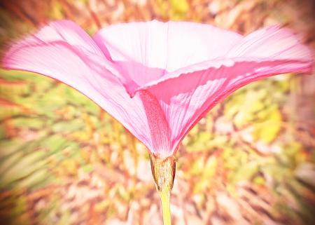 Flower Petals in motion.