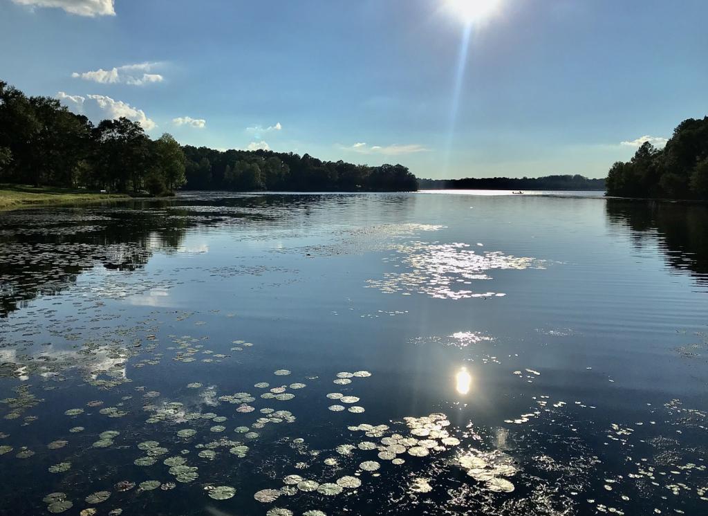 Lake Frank Jackson  - ID: 15953143 © Elizabeth A. Marker