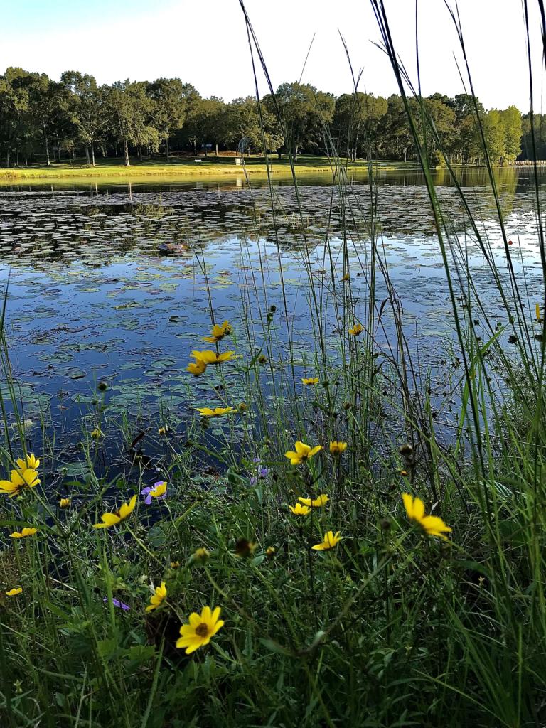 Lakeside wildflowers  - ID: 15953144 © Elizabeth A. Marker