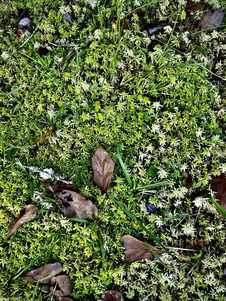 Beautiful details of moss  - ID: 15953149 © Elizabeth A. Marker