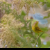 © Kitty R. Kono PhotoID# 15954004: The Palm Warbler