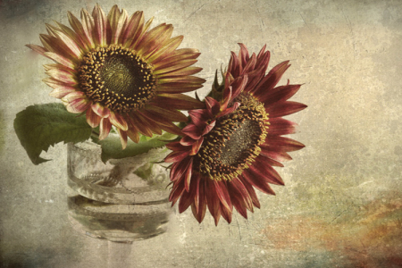 A Pair of Sunflowers