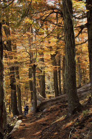 A walk in the fall forest