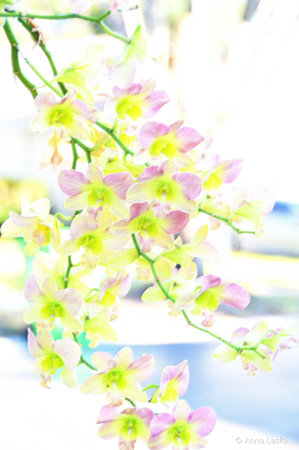 Translucent beauties 2