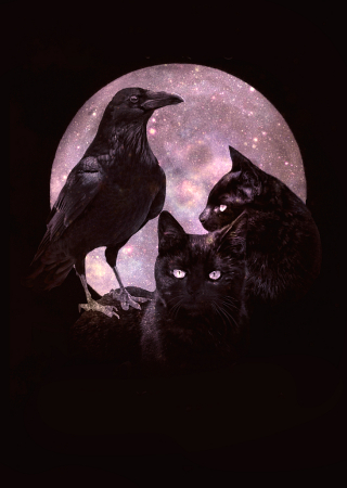 Black Cats and Raven