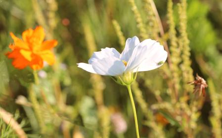 White Flower At Roadside