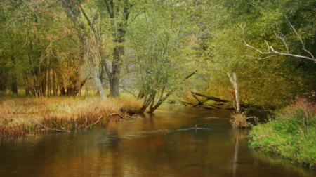 Bear Creek Autumn