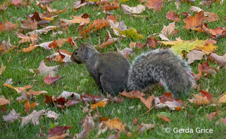 Squirrel amid Fallen Leaves