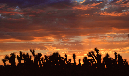 Sun Setting In The Desert