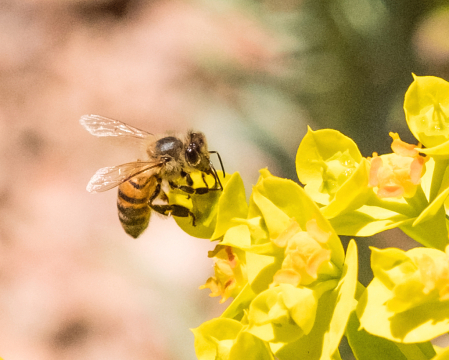 Busy bee in early spring
