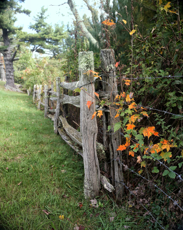 Fence Post with Personality