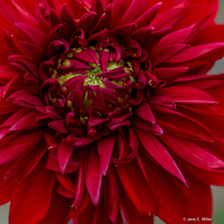 CURLS OF RED