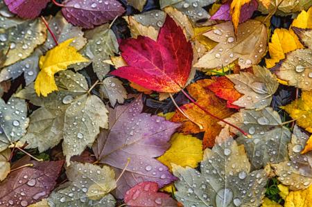 Autumn Drops  0750
