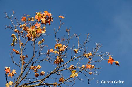 In This Year's Strange Autumn