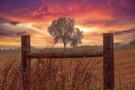 Fence and Autumn Tree