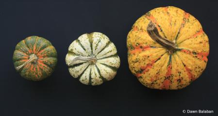 Size order pumpkins