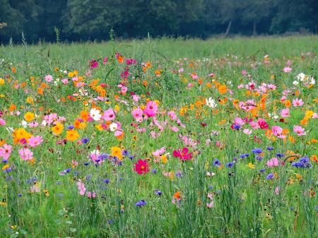 A Beautiful Field Of Wildflowers