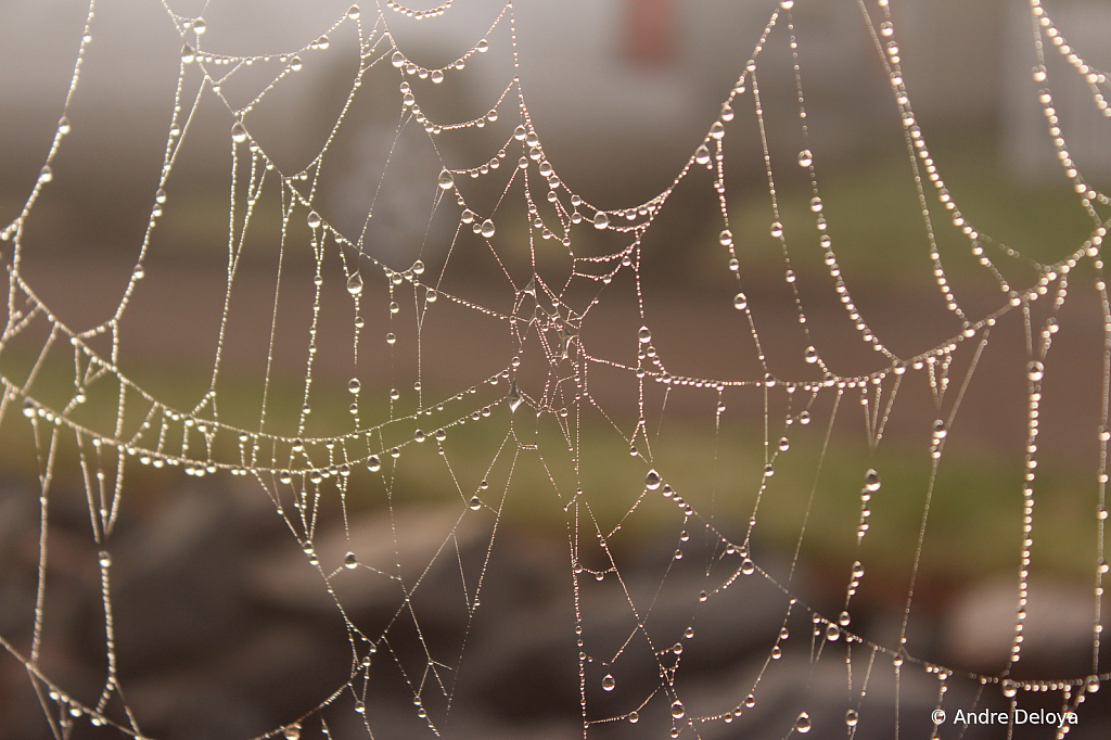 Wet Web in Coinjock, NC