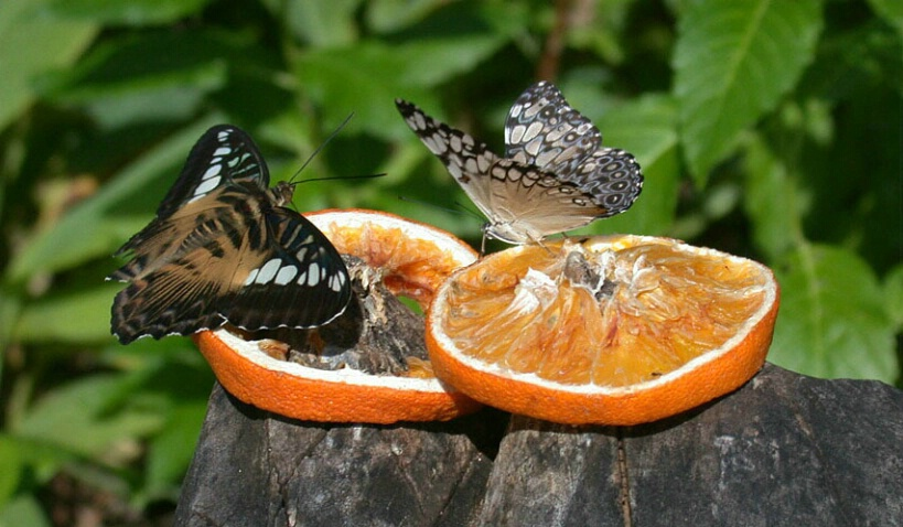 Drunk On Citrus