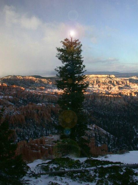 Bryce Christmas Tree