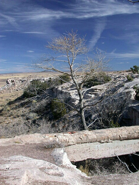 Petrifed Forest 3