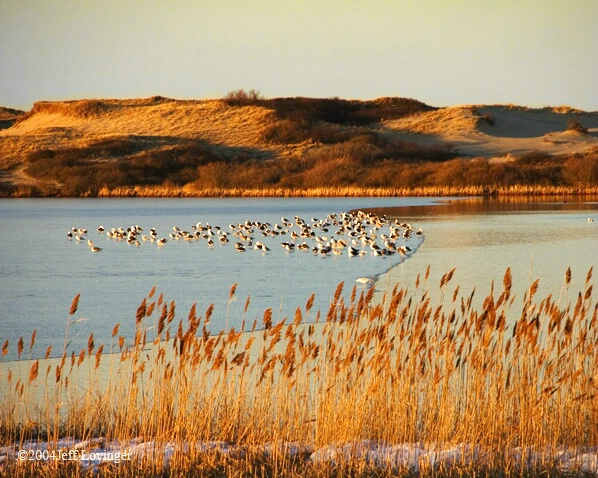 Birds on Pilgrim Lake