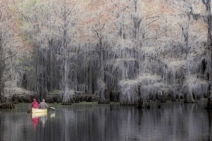 Canoeing on Caddo Lake