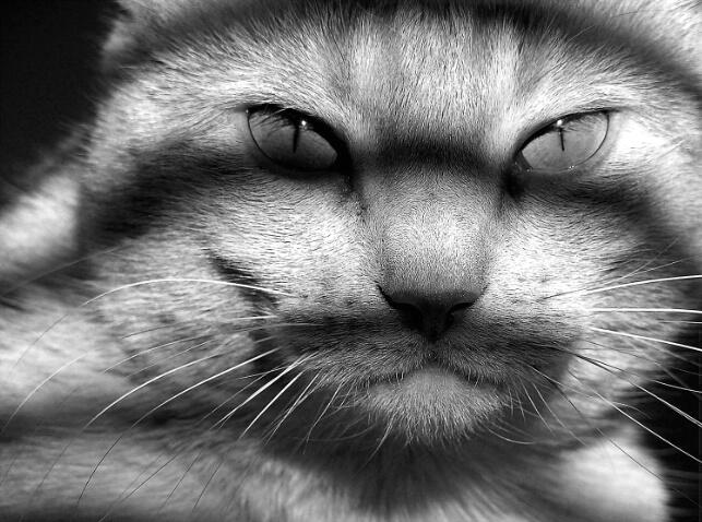 Feline Reality...