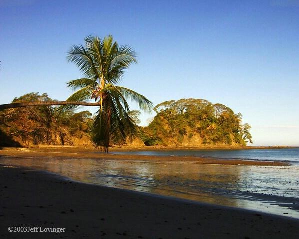 Punta Leona Palm