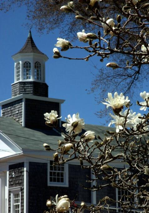 Magnolia and Steeple
