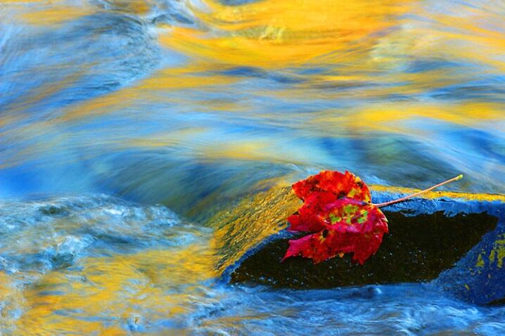 Gold leaf reflection