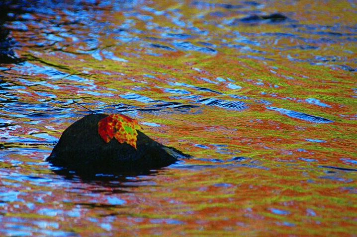 Leaf red gold reflection