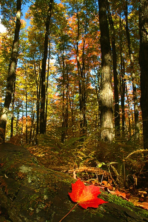 Leaf & Trees