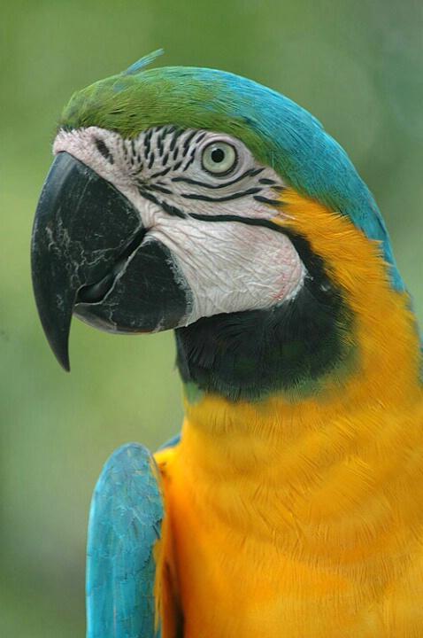 Anyone See Polly?