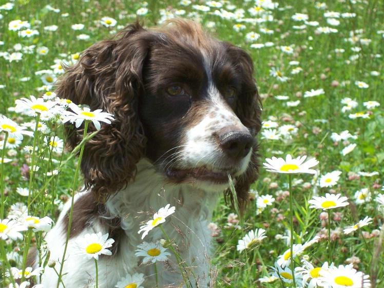 Daisy Fields