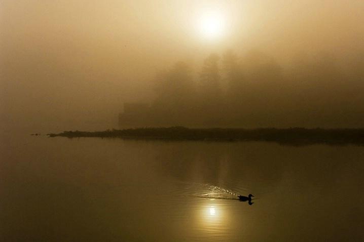 Foggy Sunrise, Queue the Duck