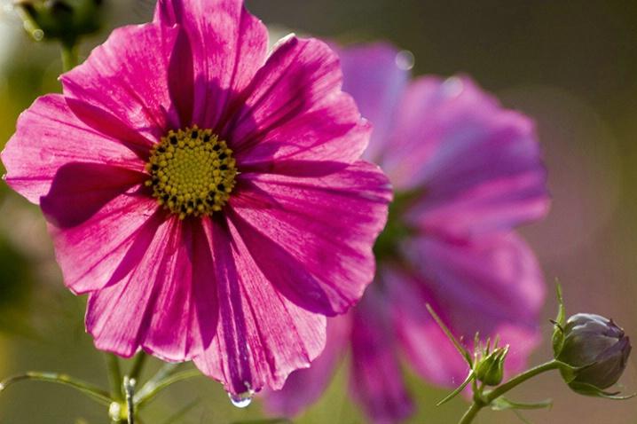Illuminated Flower