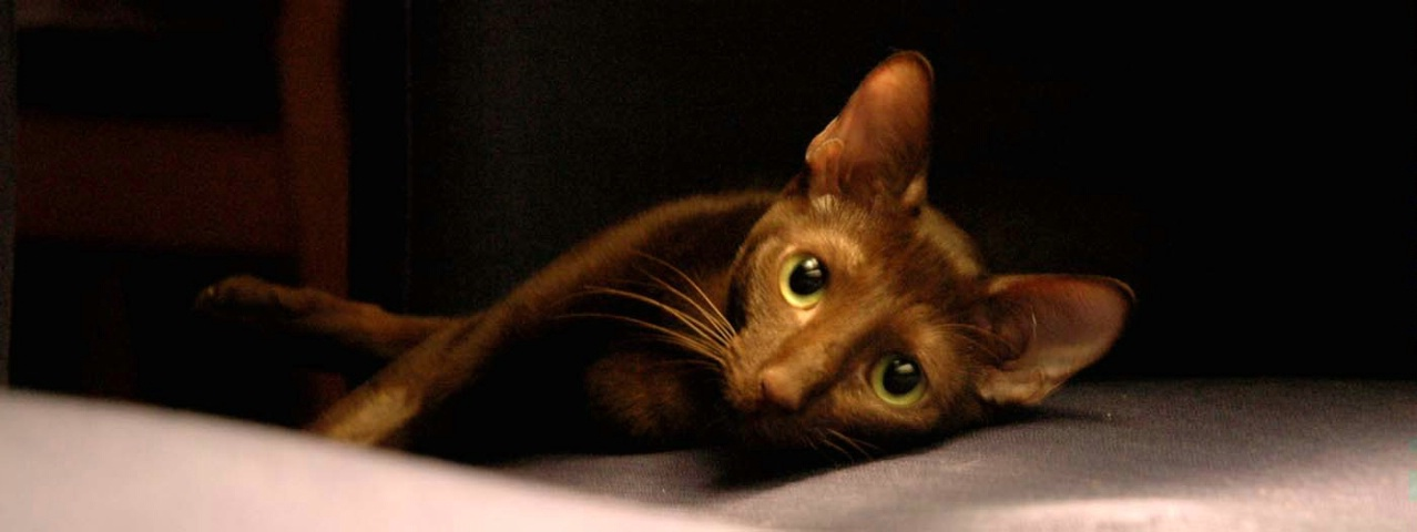 Sake,  The Brown Cat