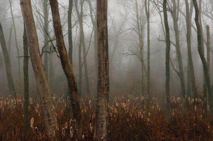 Marsh Forest