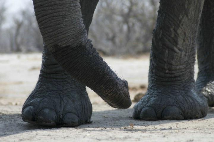 Elie feet