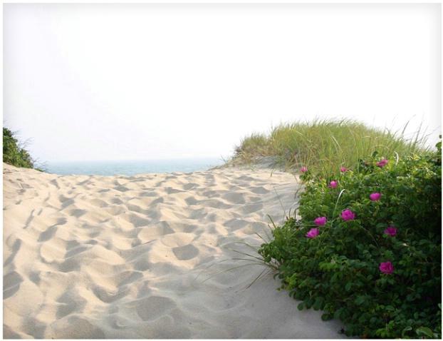 Beach Roses #111