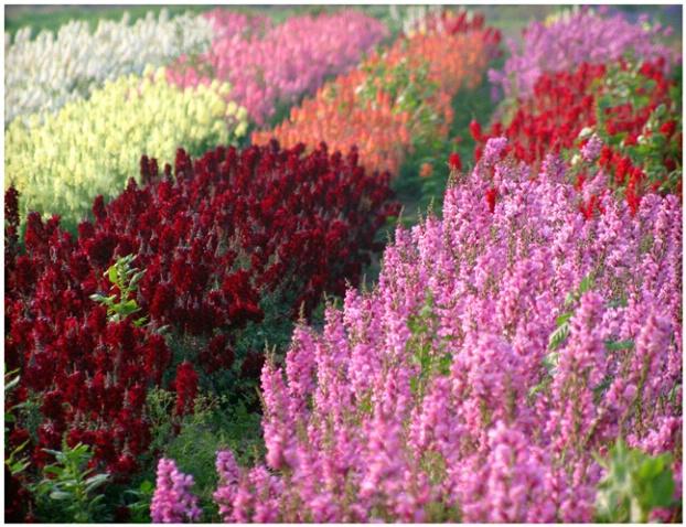 Bartlett Flowers #118