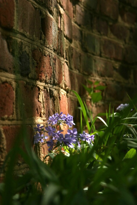 Behind the Garden Wall