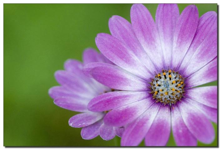 Flower at Meadowlark  Gardens, Virginia