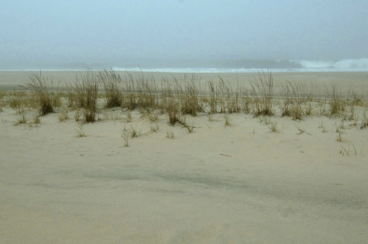 Sea Grass and Surf