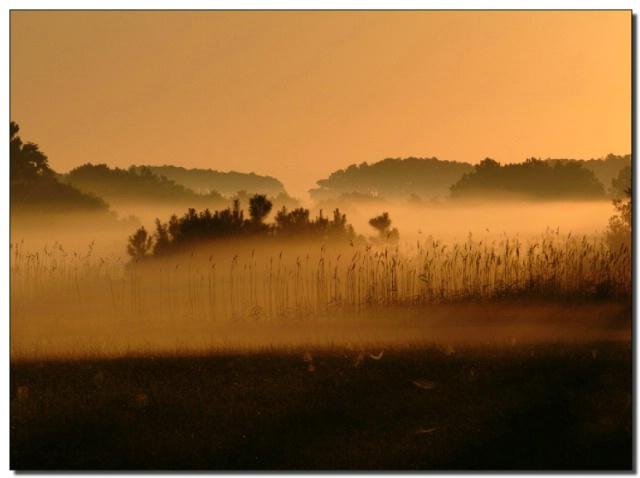 Assateague Sunrise in the Fog