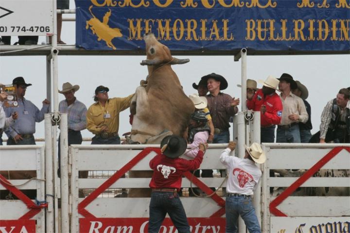 Fiesty Bull #2