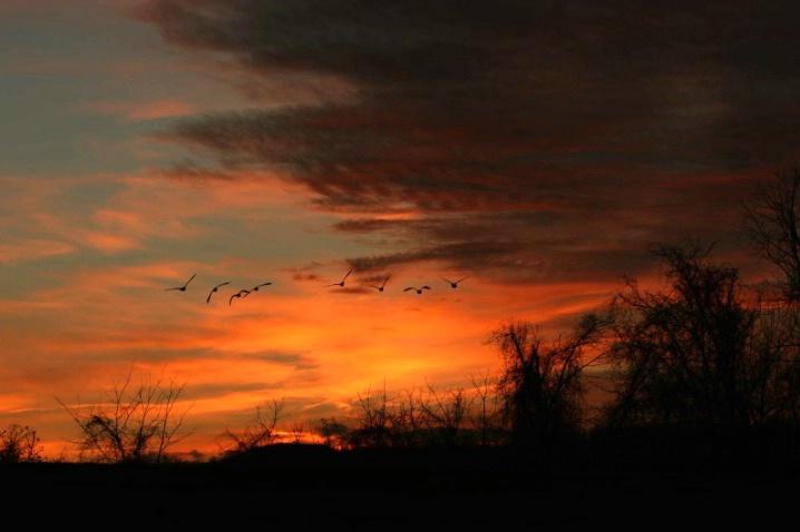 Into the Sunset, Airlee Center, Warrenton, VA